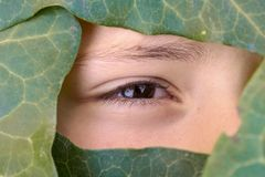 Piękna twarz zakrywająca zielonymi liśćmi obrazy stock