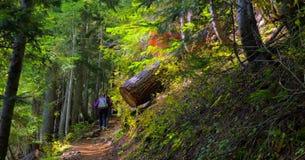 Piękna Waszyngtońska jesieni natury sceneria - Żółty asteru Butte ślad fotografia stock