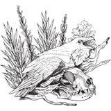 Piękna wektorowa ilustracja Round rama z różami w rocznika stylu Zdjęcia Stock