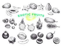 Piękna wektorowa ręka rysować egzotyczne owoc ilustracje ustawiać Obrazy Royalty Free