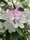 Piękna wiązka biali kwiaty zdjęcie stock