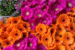 Piękna wiązka pomarańcze i menchii gerbera, odgórny widok Fotografia Royalty Free