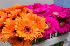 Piękna wiązka pomarańcze i menchii gerbera, odgórny widok Zdjęcie Stock