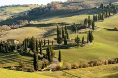 Piękna wiejska droga graniczył cyprysowymi drzewami blisko Monticchiello, Siena, Tuscany, Włochy obrazy stock