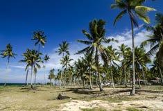Piękna wioska w Terengganu, Malezja blisko plaży otaczającej kokosowym drzewem pod jaskrawym su Zdjęcie Stock