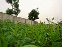 Piękna wioska z trawą Obrazy Stock