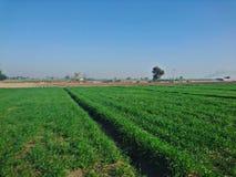 Piękna wioska z trawą i pięknem Zdjęcie Royalty Free