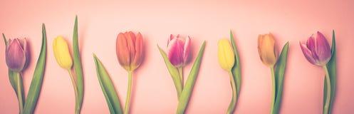 Piękna wiosna kwiatów tła wiązka Tulipanowych kwiatów tła Odgórnego widoku Różowy Długi Stonowany Obrazy Stock