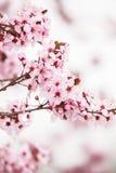 Wiosny okwitnięcie zdjęcia stock