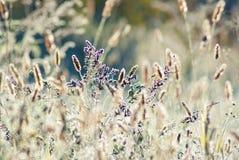 Piękna złota trawa Fotografia Stock