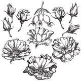 piękna zamkniętych kwiatów naturalne menchie wzrastali naturalny Fotografia Royalty Free