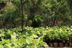 piękna zieleń Zdjęcia Stock