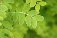 Piękna zieleń opuszcza tło w słonecznym dniu Zdjęcie Stock