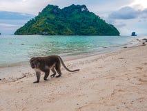 Piękna zieleni plaża z górami i małpą w Krabi, Tajlandia zdjęcia royalty free