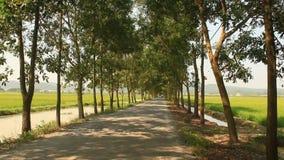 Piękna zielona drzewna droga zdjęcie wideo