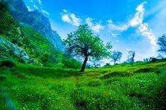 Piękna zielona natura/jeden drzewo między trawą obraz royalty free