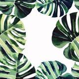 Piękna zielona tropikalna śliczna urocza cudowna Hawaii lata kwiecista ziołowa rama palmy akwarela ilustracja wektor