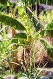 Piękna zielona tropikalna roślina w górę zdjęcie royalty free