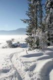 piękna zimy. Obraz Stock