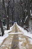 Piękna zimy aleja między drzewami zdjęcia royalty free