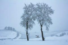 Piękna zimy natura z udziałami śnieg Drzewo z udziałami śnieg i zimno Śnieżna zima ja zdjęcie stock
