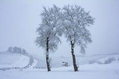 Piękna zimy natura z udziałami śnieg Drzewo z udziałami śnieg i zimno Śnieżna zima ja fotografia stock