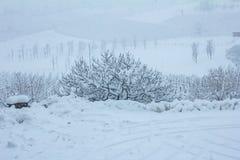 Piękna zimy natura z udziałami śnieg Mnóstwo śnieg na gałąź drzewa Śnieżna zima w Europa obrazy royalty free