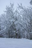 Piękna zimy natura z udziałami śnieg Mnóstwo śnieg na gałąź drzewa Śnieżna zima w Europa zdjęcie stock
