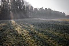 Piękna zimy sceneria z mgła lasem i marznącym śródpolnym tłem Obrazy Stock
