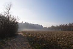 Piękna zimy sceneria z mgła lasem w niebieskiego nieba tle Obraz Stock