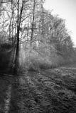 Piękna zimy sceneria z mgieł lasowymi nagimi drzewami i marznącym śródpolnym tłem Obrazy Royalty Free