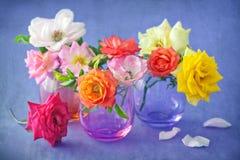 piękne świeże róże Obrazy Royalty Free