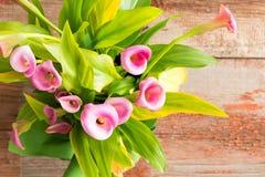Piękne świeże różowej kalii leluje fotografia stock