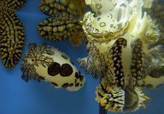 piękne życie marine ilustracji