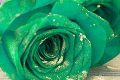 Piękne błękitne róże Obraz Royalty Free