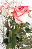 Białe róże obraz royalty free