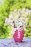 Piękne białe stokrotki kwitną w różowej wazie z faborkiem Obraz Royalty Free