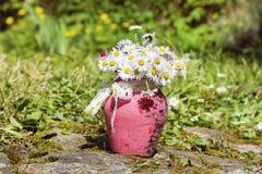 Piękne białe stokrotki kwitną w różowej wazie z faborkiem Obraz Stock