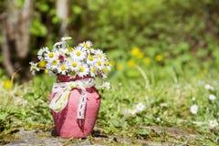 Piękne białe stokrotki kwitną w różowej wazie z faborkiem Fotografia Royalty Free