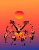 piękne bociany tańczyć Obraz Royalty Free
