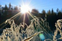 Piękne brown traw słoma w jesieni świetle słonecznym Obrazy Stock