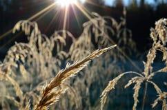 Piękne brown traw słoma w jesieni Obrazy Royalty Free