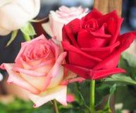 Piękne bukiet róże Obraz Royalty Free