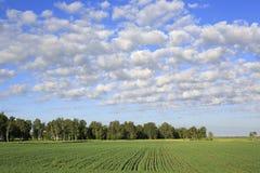 Piękne cumulus chmury pierzastej chmury nad polem Fotografia Royalty Free