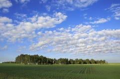Piękne cumulus chmury pierzastej chmury nad polem Zdjęcia Stock