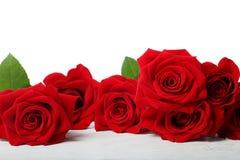 Piękne czerwone róże Obraz Royalty Free