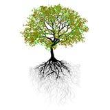 piękne drzewo royalty ilustracja
