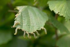 Piękne gąsienicy Zdjęcia Royalty Free
