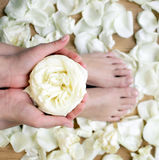 Piękne garbnikować ręki i cieki w zdroju z różanymi płatkami wokoło Zdjęcie Royalty Free