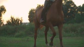 Piękne koń nogi zdjęcie wideo
